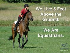 Equine Quotes, Equestrian Quotes, Equestrian Problems, Horse Girl, Horse Love, Inspirational Horse Quotes, Horse Riding Quotes, English Riding, Majestic Animals