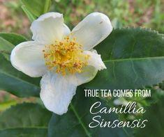 12 Problems Tea Can Soothe - For Your Massage Needs  #tea #natural #remedies #detox #detoxtea