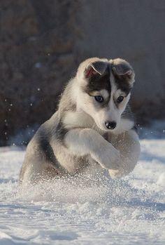 dog #dog