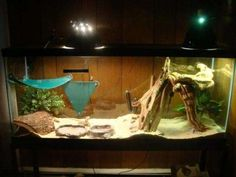Need Help Finding Stuff for a Bearded Dragon Cage and this is perfect Bearded Dragon Habitat, Bearded Dragon Cage, Pet Dragon, Baby Dragon, Pet Lizards, Pet Home, Habitats, Your Pet, Creatures