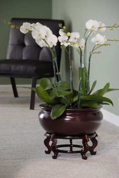 Gorgeous grouping of Moth Orchids in a beautiful fiberglass planter (available… Orchid Flower Arrangements, Orchid Planters, Orchid Centerpieces, Indoor Orchids, Artificial Orchids, Indoor Plants, House Plants Decor, Plant Decor, Orchid Seeds