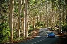 Boranup Karri Forest in Margaret River Road Trip Destinations, Amazing Destinations, Western Australia, Australia Travel, Margaret River Wineries, Plan Your Route, Famous Places, Adventure Tours, Places To Go