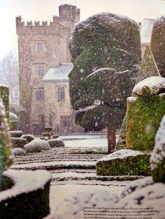 winter garden a marvelous view of a snowy Levens hall from the gardem- from an unknown magazine article Topiary Garden, Snow Scenes, Cumbria, Winter Beauty, Lake District, Winter Garden, Winter Christmas, Winter Snow, Winter Time
