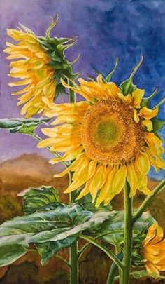 Sunflowers in watercolor by artist Lisa Hill