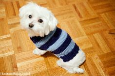 Linus' Sweater (easy dog sweater knitting pattern)