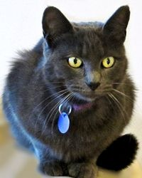 Litter Box Issues - Especially with multiple cats.   The Animal Rescue Site