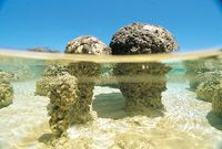 snorkel through fossils - Hamelin Pool. Earliest known life, as early as billion years old. These are called stromatolites Evolution, Lake Michigan Beaches, Costa, Seen, Beach Stones, Travel Deals, Science And Nature, Western Australia, Night Life
