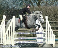 100's of Horses for sale FREE equestrian Advertising over 400 visitors a day.