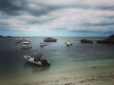 Minions swimming to get the boat. #islandlife #rottnestisland  by silly_antikz http://ift.tt/1L5GqLp