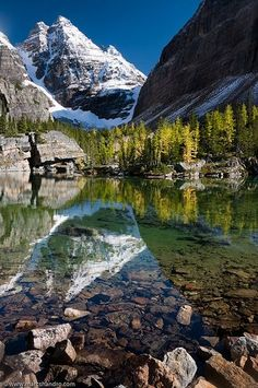 Pristine Canadian Alpine Victoria Lake (more like a small pond) reflecting Ringrose Peak and can be seen along the Lake Oesa trail in the Lake O'Hara region of Yoho National Park, BC.