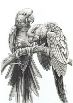 85 Simple And Easy Pencil Drawings Of Animals – Buzz Hippy - Metarnews Sites Realistic Animal Drawings, Realistic Sketch, Pencil Drawings Of Animals, Bird Drawings, Bear Face Drawing, Bird Pencil Drawing, Parrot Drawing, Drawing Faces, Colorful Bird Tattoos