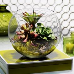 Terrarium - want to make one