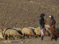 nomad , Palestine