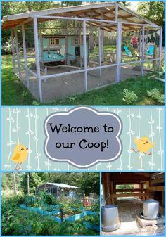 Photo Tour of our Chicken Coop Best Chicken Coop, Chicken Coop Plans, Building A Chicken Coop, Chicken Coup, Chicken Tractors, Types Of Chickens, Keeping Chickens, Raising Chickens, Raising Quail