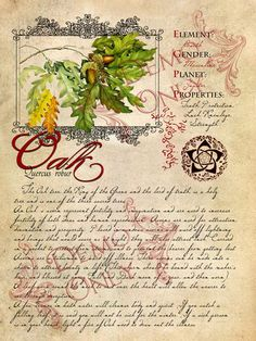 the Cackling Cauldron ~Book of Shadows ~ Oak page