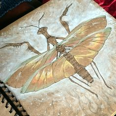 Watercolour and ink pieces from my favourite brown sketchbook are now available as high quality digital prints! Digital Prints, Digital Art, Praying Mantis, Taxidermy, Watercolor And Ink, Tarot, Etsy Seller, My Arts