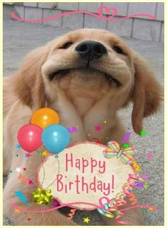 Looking for for ideas for happy birthday wishes?Browse around this website for perfect happy birthday inspiration.May the this special day bring you love. Happy Birthday Animals, Funny Happy Birthday Wishes, Happy Birthday Pictures, Birthday Wishes Quotes, Belated Birthday, Happy Birthday Greetings, Funny Birthday, Happy Birthday With Dogs, Happy Birthday Cousin Male