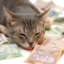 8 Habits of Super-Successful Cats