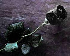 8 Best Gambar Bunga Yang Indah Dan Cantik Images Beautiful Flowers