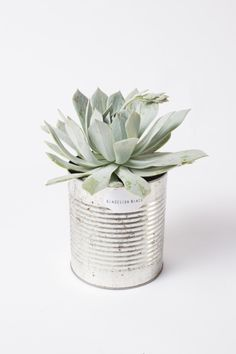 Plants Succulent Diy 52 Ideas For 2019 Green Plants, Air Plants, Indoor Plants, Cacti And Succulents, Planting Succulents, Planting Flowers, Cactus Plante, Plants Are Friends, Deco Floral