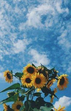 Tumblr Wallpaper, Wallpaper Pastel, Tier Wallpaper, Sunflower Iphone Wallpaper, Iphone Wallpaper Vsco, Wallpaper Samsung, Aesthetic Pastel Wallpaper, Cute Wallpaper Backgrounds, Animal Wallpaper