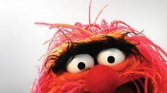 The muppets films et serie tv