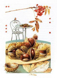 Marjolein Bastin Nature Sketches - kastanje - chestnut