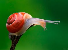 🌿The Snail🌲Ideas 🌳🌲 : More Pins Like This At FOSTERGINGER @ Pinterest🌲🌿