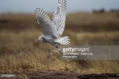 Image result for bird taking flight
