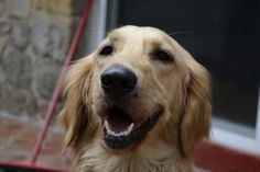 The 18 Greatest Dog Smiles Ever