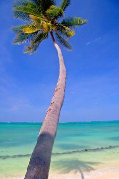 Palm Tree, Sea & Sand