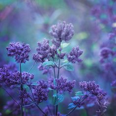 Floral Photography Inspired by Claude Monet by Nikita Gill Poet and photographer Nikita Gill experiments with a series of floral photography the concept of impressionism and the important play of...