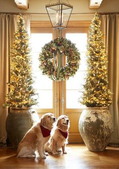 Traditional Home: Comfortable and Inviting Home for the Holidays... Two golden retrievers sit by French doors just outside the library. The narrow holiday trees are set in rustic pots from Thailand.
