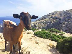 Wir zeigen euch die zehn schönsten Orte auf Mallorca, die ihr besuchen solltet. Das Beste: Der Besuch ist absolut gratis. Los geht's...