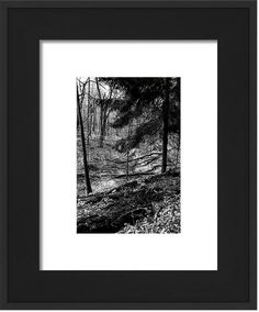 """Brand new work to share. This is """"Silver Forest 27"""" the latest in my series of black and white photographs showing the beauty of my local forests.  Follow this link to buy a copy today.    #nature #landscape #blackandwhitephotography #fineart #beauty #woods #trees"""