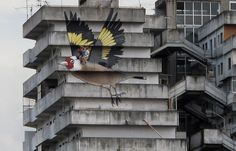 4-Story Goldfinch Painted on an Abandoned Building in Naples by German artists Simon Jung and Paul & Hanno Schweizer