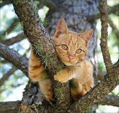 Cute cat in a tree
