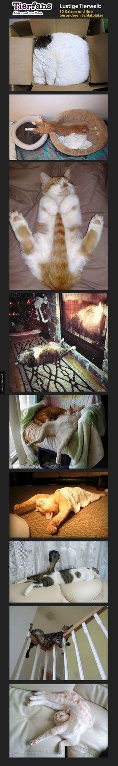 9 Katzen die keine Ahnung haben, wie man schläft