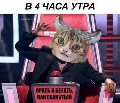 В 4 часа утра орать и бегать. Русские (русскоязычные) смешные мемы. Мемасы ржач приколы 18+ ЧТБ Мемы на русском