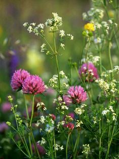 25 Beautiful Ideas for Wildflower Fields - Floral Garden Ideas Spring Flowers, Wild Flowers, Field Of Flowers, My Flower, Beautiful Flowers, Blossom Flower, Meadow Garden, Flower Photos, Planting Flowers