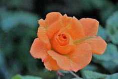 M   o    m    e    n    t    s    b    o    o    k    .    c    o    m: Άναρχα - και, ίσως, άκαιρα- η φύση γεμίζει τους κή...