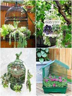 Birdcage planters are a favorite with creative gardeners. These tips share ideas… Birdcage planters are a favorite with creative gardeners. These tips share ideas for setting up a new or upcycled birdcage as a planter for succulents or annuals. Succulent Display, Succulent Planter Diy, Hanging Succulents, Flower Planters, Diy Planters, Succulents Garden, Planter Ideas, Garden Planters, Container Flowers