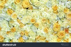 Find Flower Picture Roses Carnations stock images in HD and millions of other royalty-free stock photos, illustrations and vectors in the Shutterstock collection. Thousands of new, high-quality pictures added every day. Rose Flower Pictures, Carnations, Photo Editing, Royalty Free Stock Photos, Roses, Illustration, Garden, Flowers, Image