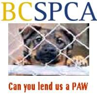 Dog walk for the BCSPCA