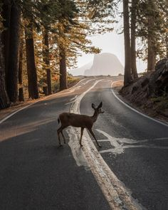- Two years ago I took a much needed solo trip to Yosemite. I enjoyed every minute of solitude that I had 😁 Outlander, Robert Doisneau, The Secret History, Oh Deer, Life Is Strange, Parcs, Bambi, Solo Travel, Travel Usa