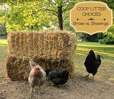 Straw vs. Shavings - My Choice for Coop Litter