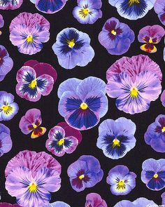 Bloom with a View - Pansy Pop - Black