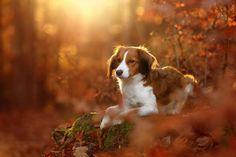 Magic Autumn | by Kooikerhondje
