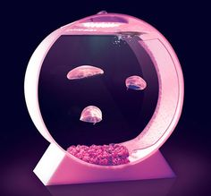 Jellyfish tank - SHUT THE FRONT DOOR!  I would get nothing done looking at this thing all day long. Tank Design, Light Building, Cool Gadgets, Dolphins, Jellyfish Tank, Color Changing Led, Cool Pets, Aquarium Fish, Fish Tanks