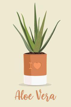 Gel Aloe, Aloe Vera Gel, Aloe Vera En Pot, Plant Art, Plant Illustration, Illustrations, Art Mural, Planter Pots, Clip Art